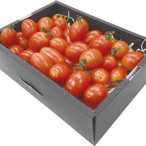 フルーツトマト アイコ 800g